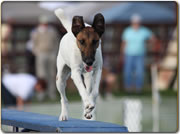 Central Okanagan Dog Agility